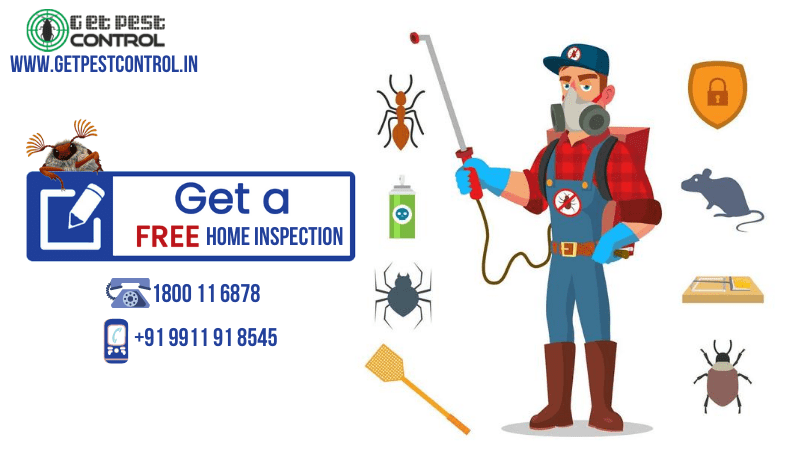 best pest control professional