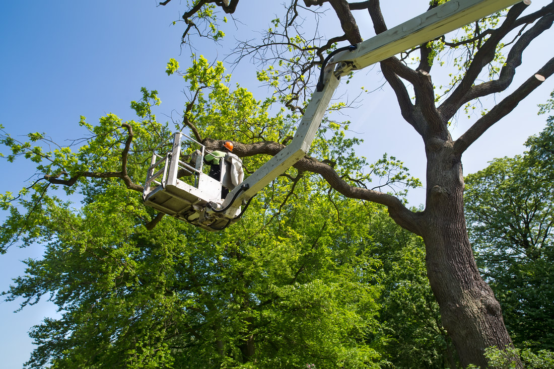 Long-Beach-tree-service