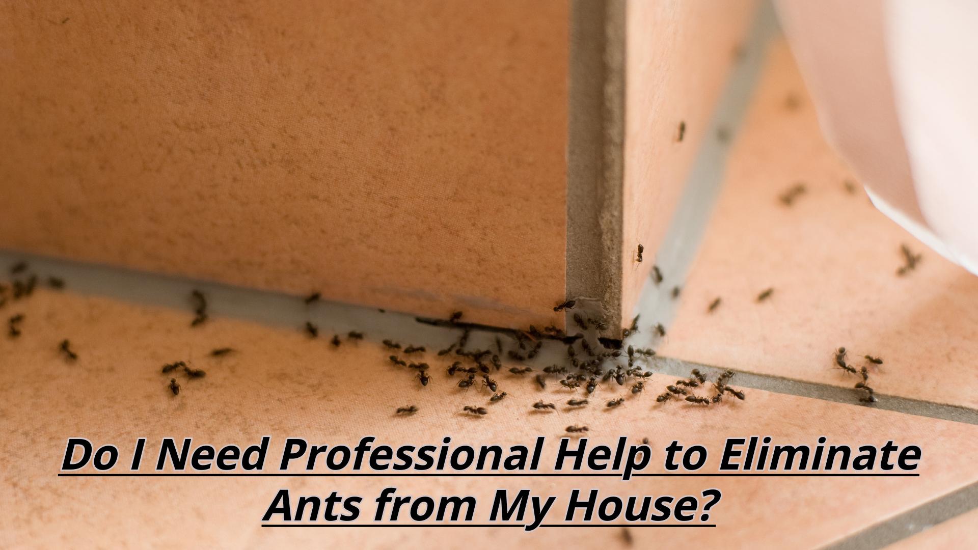 ant control company Brisbane