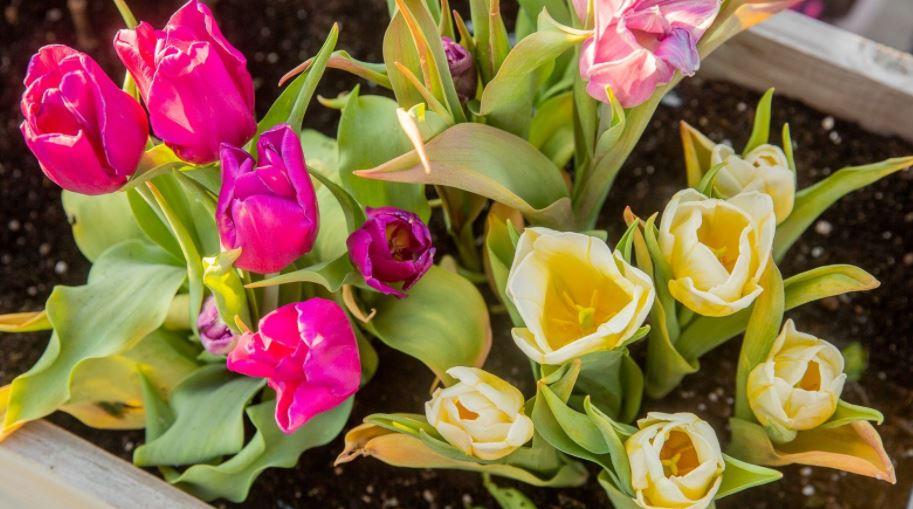 Beauty of Your Garden